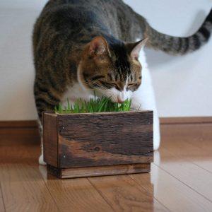 猫草ホルダー