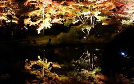 松島紅葉ライトアップ(円通院・心字の池)