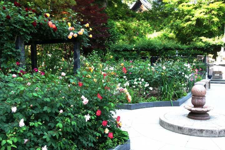 円通院のバラ園「白華峰西洋の庭」