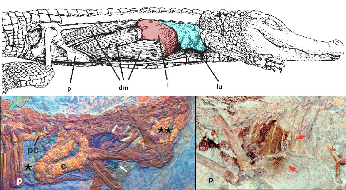 Palaeontologyonline Media Brocklehurstfigure03