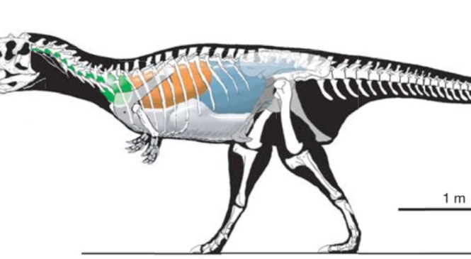 Fossil Focus: The Archosaur Respiratory System — Or — Breathing Life into Dinosaurs