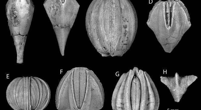 Fossil Focus: Blastoids
