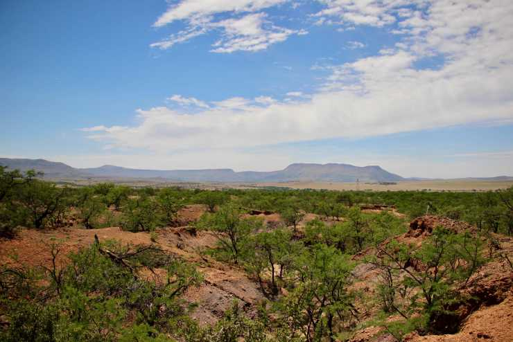 Figure 4 — A view over the Karoo Basin, South Africa, a region that has been extensively sampled for many years by palaeontologists from around the world. Fossils from areas within the Karoo have been crucial in revealing the distant origins of mammals, tortoises and dinosaurs. Credit: Emma Dunne.