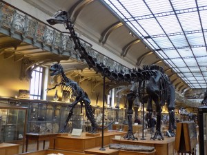 Figure 4 — Diplodocus and Allosaurus from the Muséum national d'Histoire naturelle, Paris. Authors own work.
