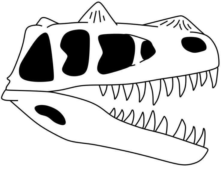 Figure 7 — Diagram of Ceratosaurus skull. Author's own work.