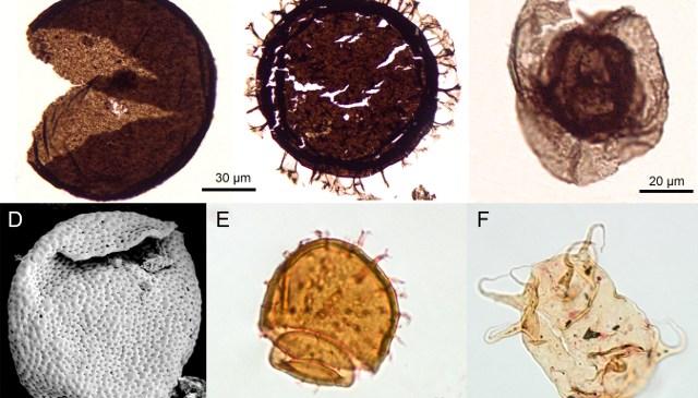 Fossil Focus: Acritarchs