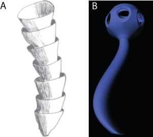 Figure 3 — Weakly mineralized fossils of uncertain origin from the late Ediacaran period. A. Cloudina reconstruction (Source). B. Namacalathus reconstruction.