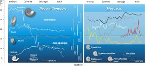 Figure 4 — Habitats and sea water temperature estimated from oxygen isotope data in extant cephalopods (left) and ammonoids (right; modified from Ritterbush et al. 2014 and Lukeneder et al. 2010).