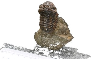 Figure 2 — A 3D image of a trilobite fossil, imaged using photogrammetry (Source: Falkingham 2012)