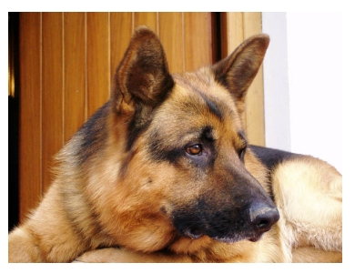 "Cercasi ""Dog-Sitter"""