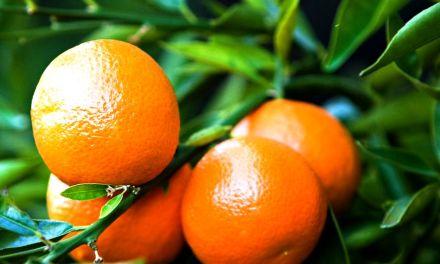 PALAGIANO (TA). Domani e domenica, sagra del mandarino, con stand, convegni ed inaugurazione di Iat e pista ciclabile