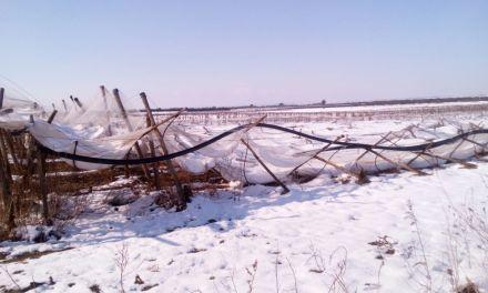 A distanza di due mesi emergono ulteriori danni in agricoltura per neve e gelo