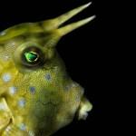 Marine life in El Nido