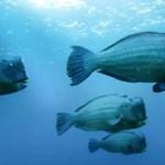 Big school of fish in El NIdo