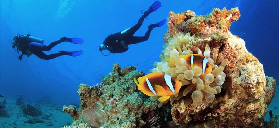 PADI Advanced Open Water Course - Nemo
