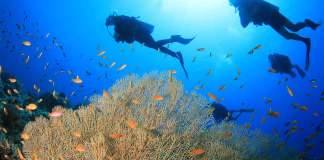 Fun Diving El Nido Philippines