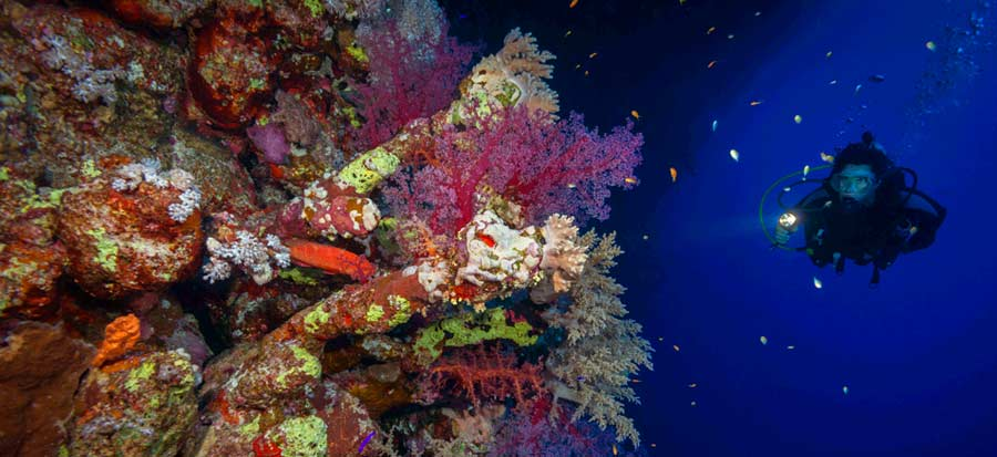 Night Diving - Palawan