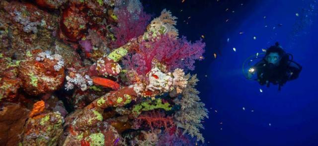 corals-scuba-diving-advanced-night-dive