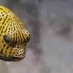 Cute fish in el Nido Philippines