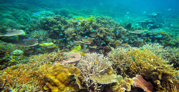 CORAL_REEF_PHILIPPINES