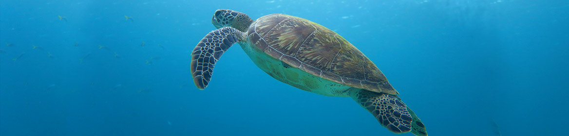 PADI Discover Scuba Diving - Sea Turtle