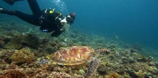 Green Sea Turtle encounter
