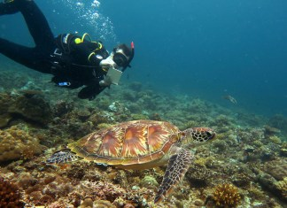 Green Sea Turtle encounter
