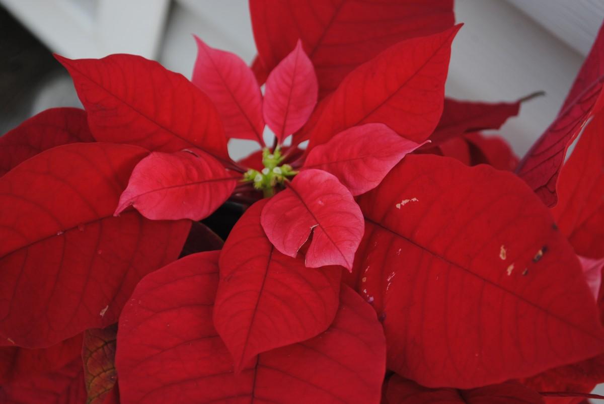 A Natale regaliamo una pianta!
