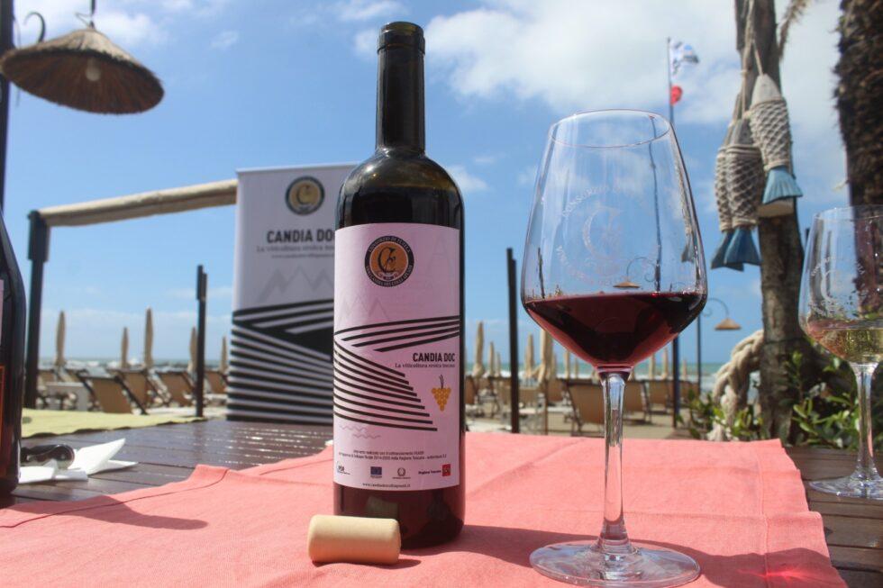 Caffè della Versiliana: vino: viticoltura eroica, custodi del territorio e Candia Doc