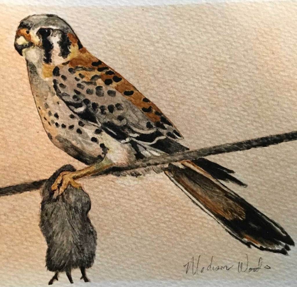 "Entire work in colors made from stones, char, and clay found at Wild Ozark. 5"" x 7"", $125. Sold. The painting was based on a photo by Terry Stanfill, one of our local naturalist photographers. He manages and photographs the Gentry Eagle Watch."
