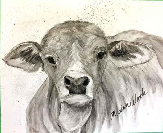 """""""Brahman Baby"""", in bone black, creek shale, and willow black. At the point now where I'll begin adding details, refining highlights and shadows. You can see the whole progression either by following me on Instagram or going to the post at my Wild Ozark site."""