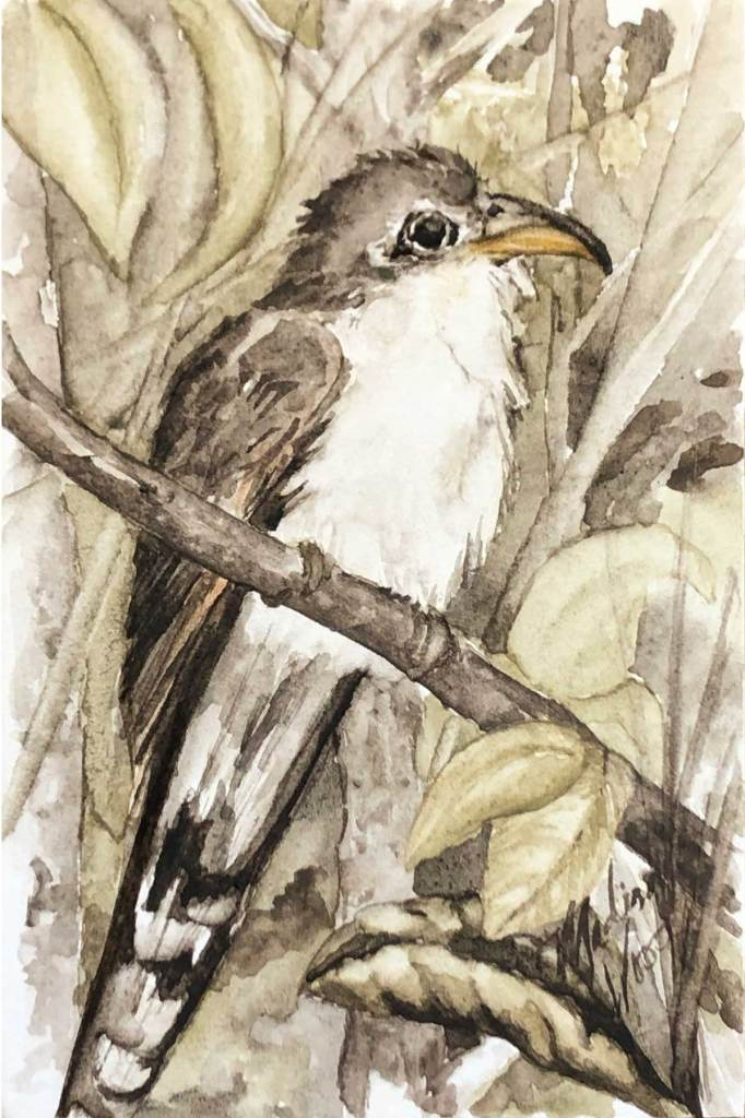 Yellow-billed Cuckoo, also known as a rain crow. Original art by Madison Woods featuring Ozark pigments.
