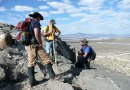 Paleontological Society Student Research Grants