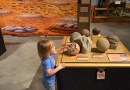 Summer Job @ The Philip J. Currie Dinosaur Museum