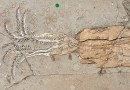 On the News   Squid evolved in marine wars more than 100 million years ago @ New Scientist
