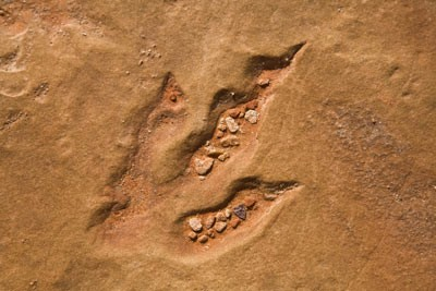 Trace Fossils and what they tell us | A lecture by Dr. Jon Noad