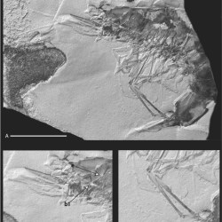 Just out | New Early Cretaceous shrimp (Decapoda) from the Sidi Aïch Formation of the Northern Chotts Range, southern Tunisia: Taxonomy, biostratigraphy, and palaeoenvironmental implications @ Cretaceous Research