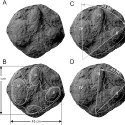 Just out | The first evidence of iguanodontids (Dinosauria: Ornithischia) in Alberta, Canada – A fossil footprint from the Early Cretaceous @ Cretaceous Research