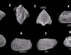Just out | Paleoecology and paleobiogeography of Paleocene ostracods in Dineigil area, South Western Desert, Egypt @ Journal of African Earth Sciences