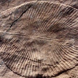 On the News | Mattresses, the Universe and Everything: fossils of Ediacaran biota @ The Guardian
