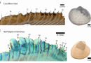 Just out | High-latitude settings promote extreme longevity in fossil marine bivalves @ Paleobiology