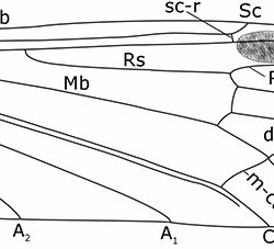 Just out | The genera Architipula Handlirsch, 1906 and Grimmenia Krzemiński and Zessin, 1990 (Diptera: Limoniidae) from the Lower Jurassic of England @ Palaeontologia Electronica
