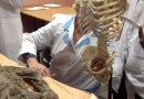 Instructor @ Stony Brook Medicine | Vertebrate Paleontology