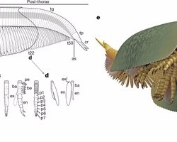 Just out | Burgess Shale fossils illustrate the origin of the mandibulate body plan @ Nature