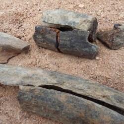 On the News | Brazil | Adolescente encontra fósseis de possível 'dinossauro' em Olivença @ Alagoas 24 horas