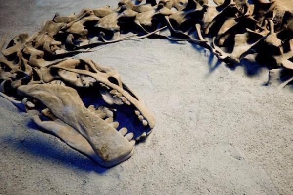 Job Offer   Adjunct Dinosaur Paleontology Instructor