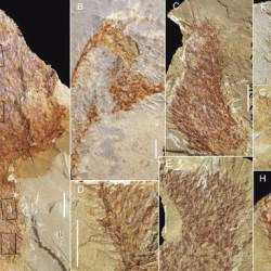 Just out | Chancelloriid Allonnia erjiensis sp. nov. from the Chengjiang Lagerstätte of South China @ Journal of Systematic Palaeontology