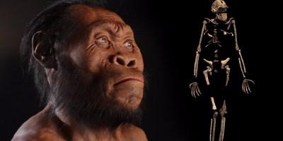 Video | Homo nadeli @ The Royal Tyrrell Museum Speaker Series