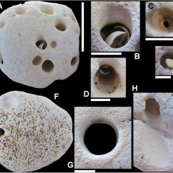 Just out | Neoichnology of Chalk cobbles from north Norfolk, England: implications for taphonomy and palaeoecology @ Proceedings of the Geologists' Association