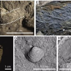 Just out | Stratigraphy and paleoenvironmental analysis of the Frasnian-Famennian (Upper Devonian) boundary interval in Tioga, north-central Pennsylvania @ Palaeogeography, Palaeoclimatology, Palaeoecology